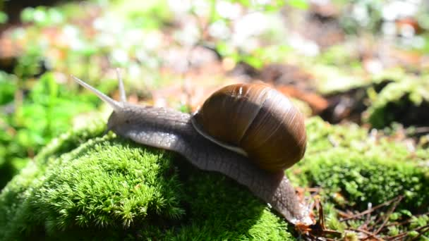 Snail in the wood. Shooting of snails.