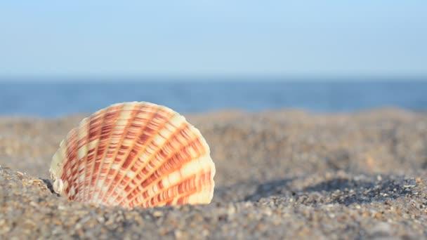 Mořské mušle na pozadí moře. Fotografování na pláži.