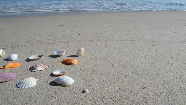Faszfejek a homokon, a parton. Lövöldözés a parton.
