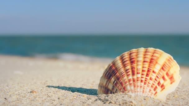 Cockleshells na písku na pozadí vln. Fotografování na pláži.