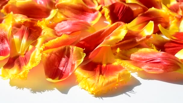 Pozadí z okvětních lístků tulipánů. Střelba v hnutí.