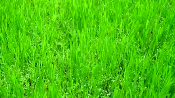 Shooting of a grass in the movement.