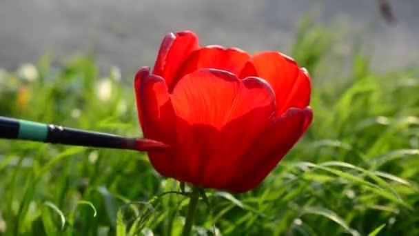 Rajzolunk tulipánokat, szürrealizmust. Művész és virág.