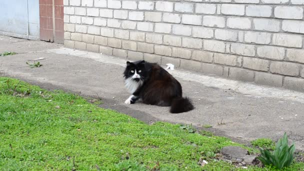 Cat near the house. The guarded look, very fat cat
