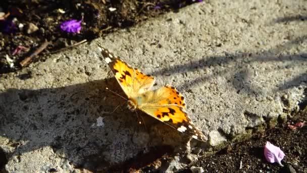 Motýl sedí na kameni.