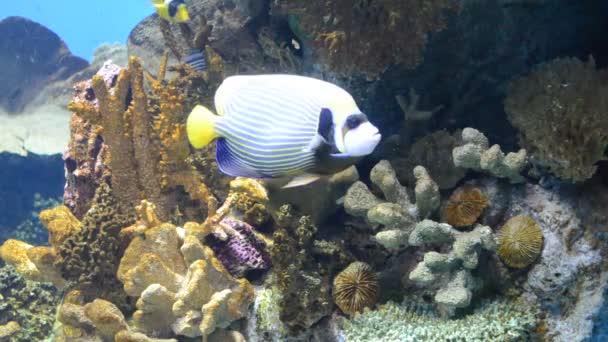 country Spain - Barcelona Aquarium