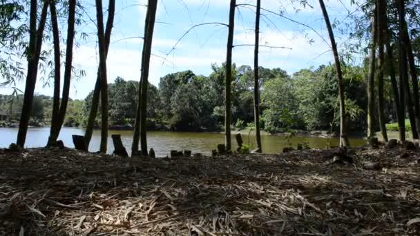 Bambushain und Teich