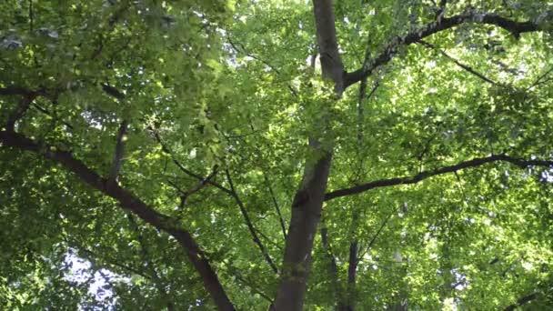 Nádherné letní dřevo. Natáčení v létě