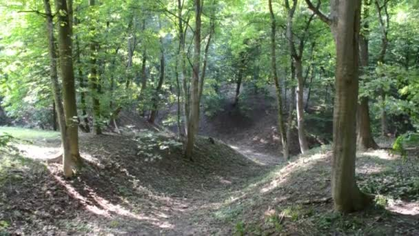 Ravine in the wood. Mysterious way in green deciduous forest scenery. Beech roots.