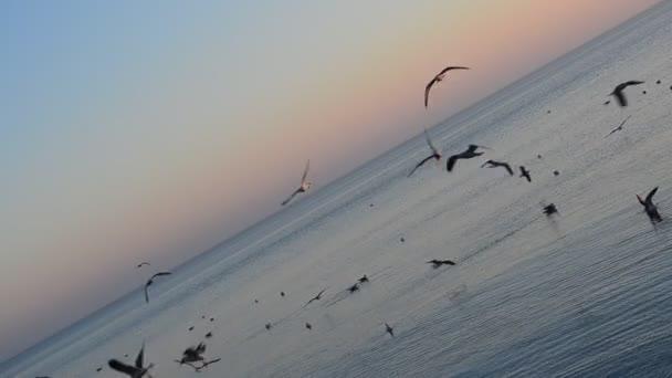 Tengeri természet. Tenger és horizont