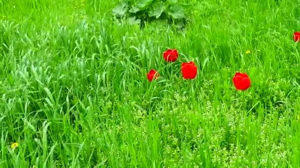 Tavaszi rét. Tavasszal forgatás..