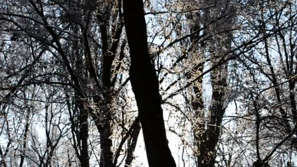Varázslatos napsugarak hullanak a fák ágaira..