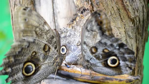 Pillangók lelövése. Makrorúgás.