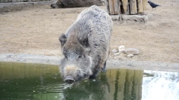 Madridi állatkert, Spanyolország. Fényképezés Spanyolországban.