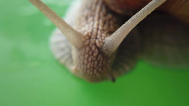 Shooting of a garden snail. Shooting of macro.