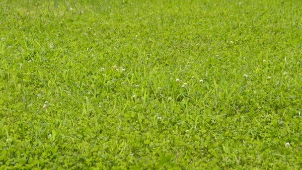 Zöld fű háttér textúra egyenes