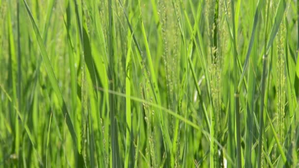 Grass. Shooting in the summer.