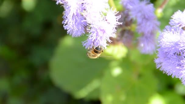 květina s včelami. Natáčení přírody.