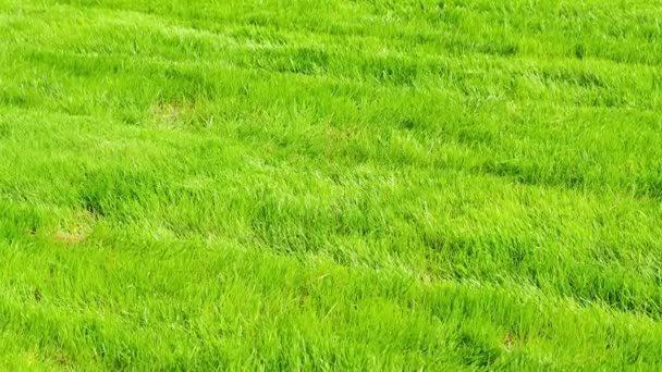 green grass. Shooting of the nature.
