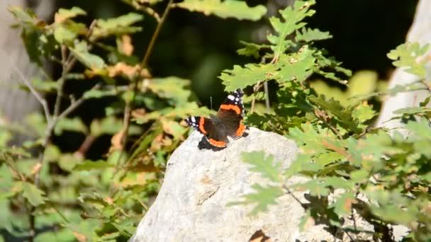 Schmetterling auf Blumen. Aufnahmen der Natur.