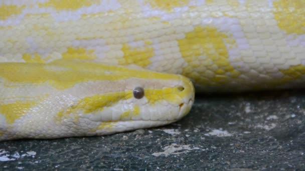 Python. Natáčení v zoo.