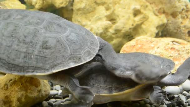 Teknős. Lövöldözés egy állatkertben.