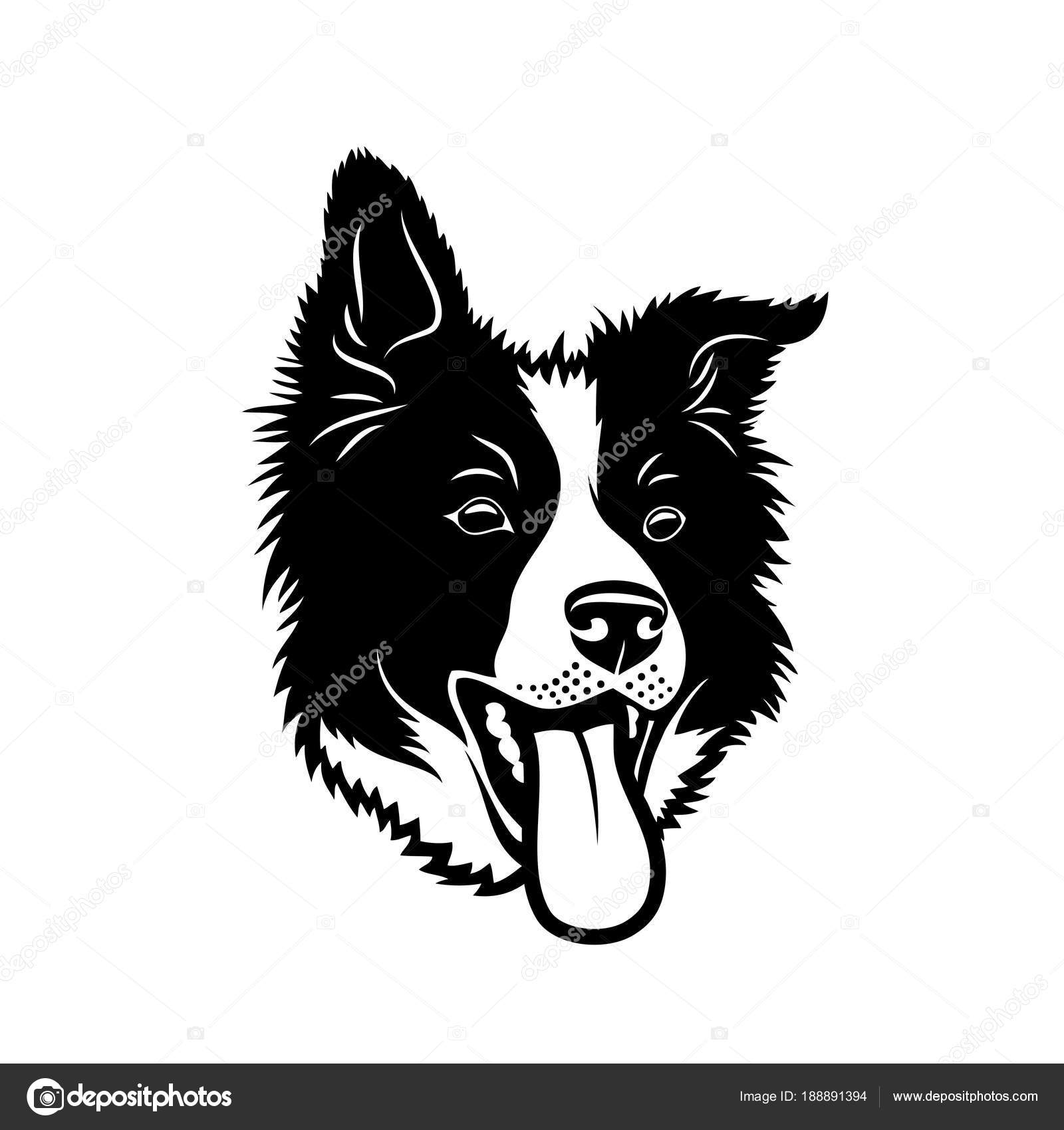 how to draw a cartoon border collie