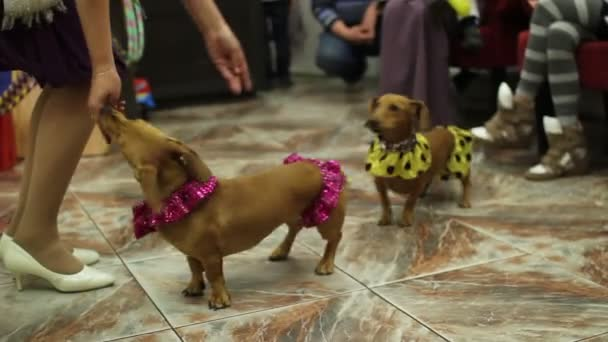 Zwei Hunde springen über Hindernisse und fressen Leckeres vom Handtrainer