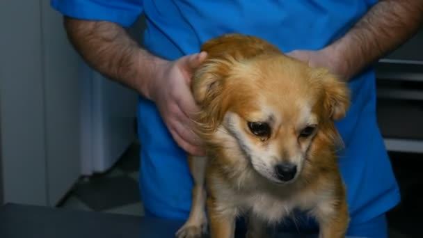 pes v klinice vet před očkováním