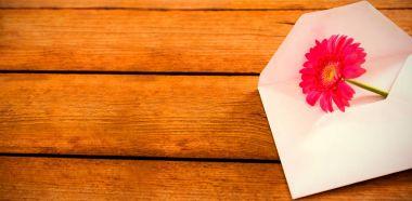 Pink gerbera daisy in envelope on wooden plank