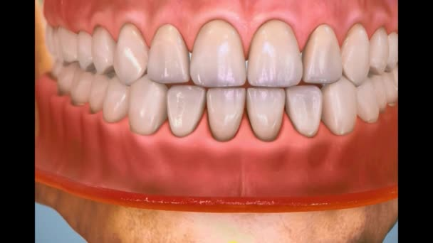 Zubní 3D video - Zubní hygiena 7