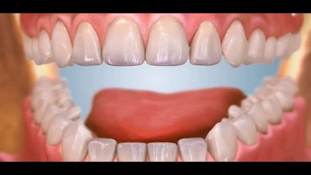 Zubní 3D video - ortodoncie 33