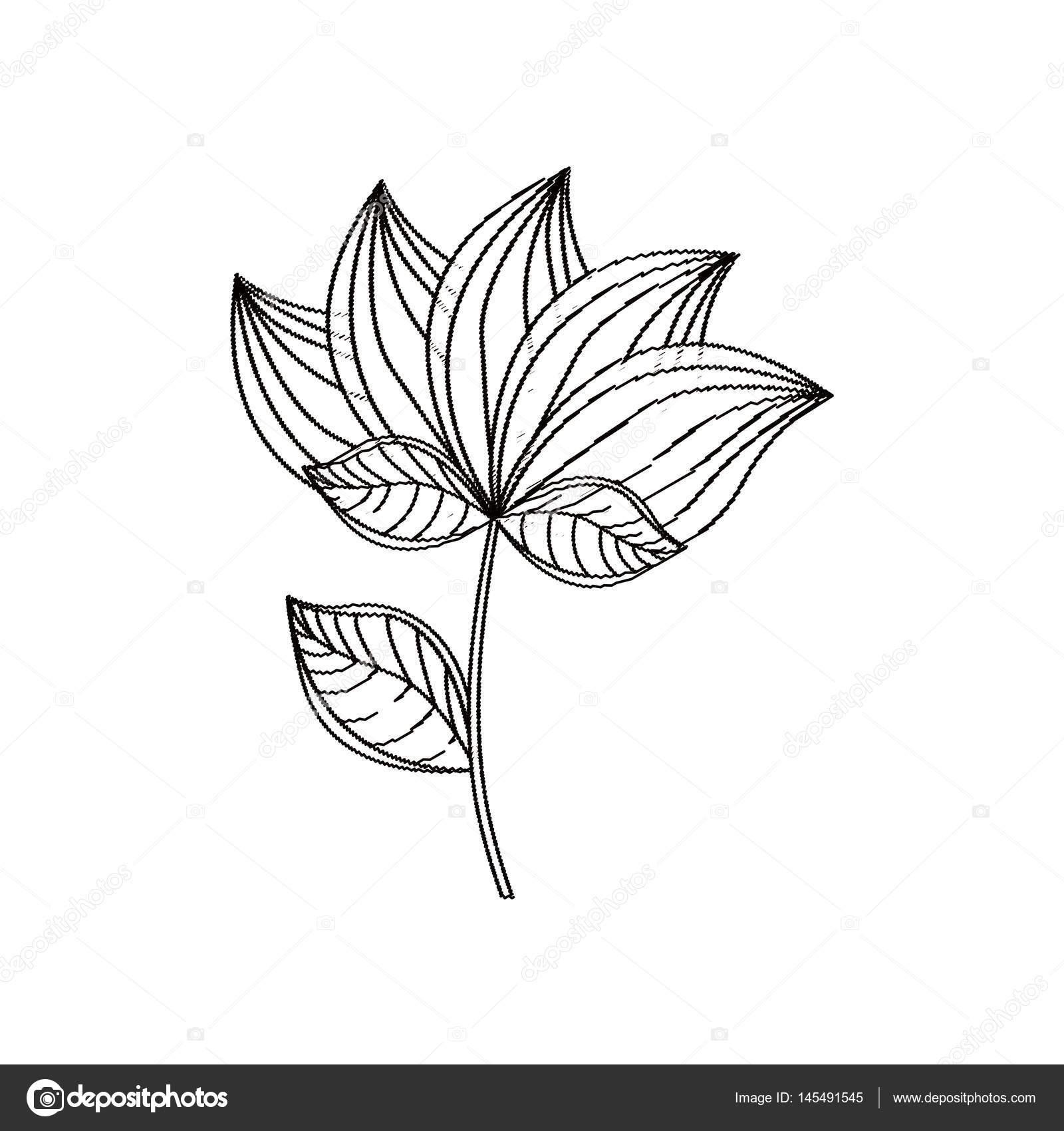Lotus flower decoration sketch stock vector djv 145491545 lotus flower decoration sketch stock vector izmirmasajfo