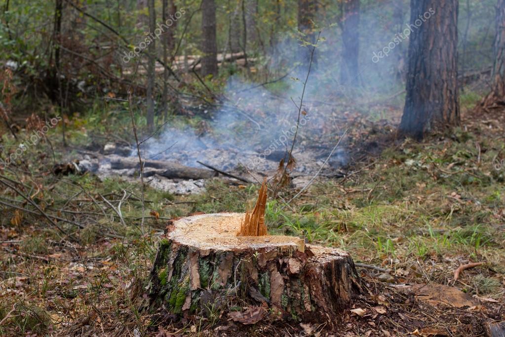 Ліси на Херсонщині знищують швидше, ніж висаджують нові
