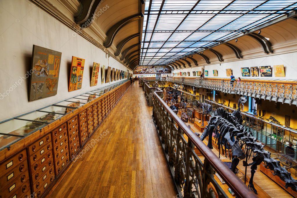 esqueletos de animales en la galería de Paleontología y anatomía ...