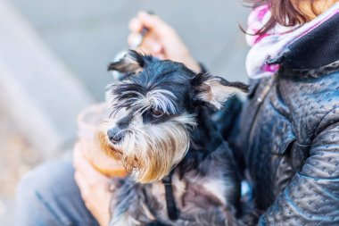 woman holds a dog in the arm eating