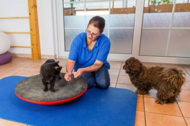 woman works with a cat and a dog in an animal physiotherapy office