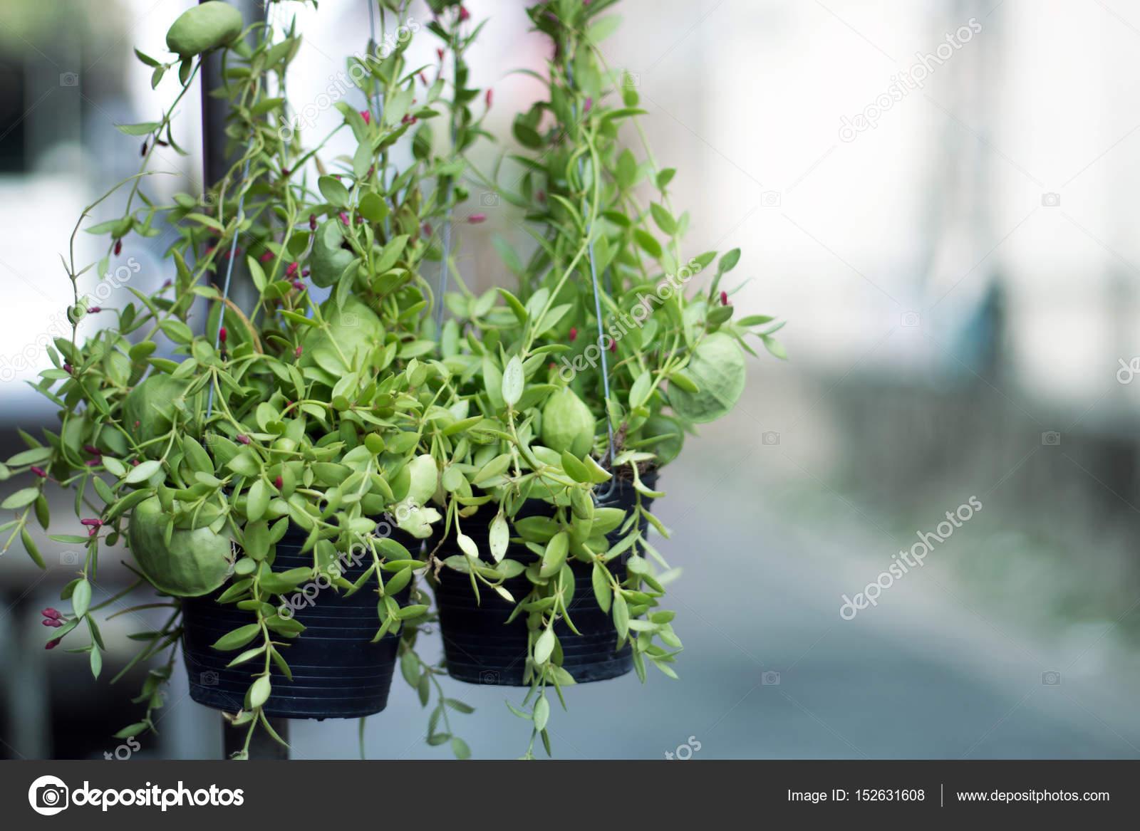 planta de hormigas en el jardín — Foto de stock © yanukit #152631608