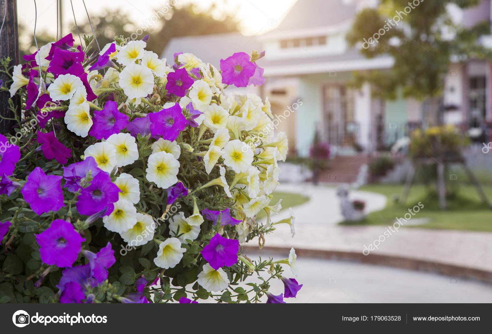 Fleur pourpre et jaune décoration jardin extérieur maison ...