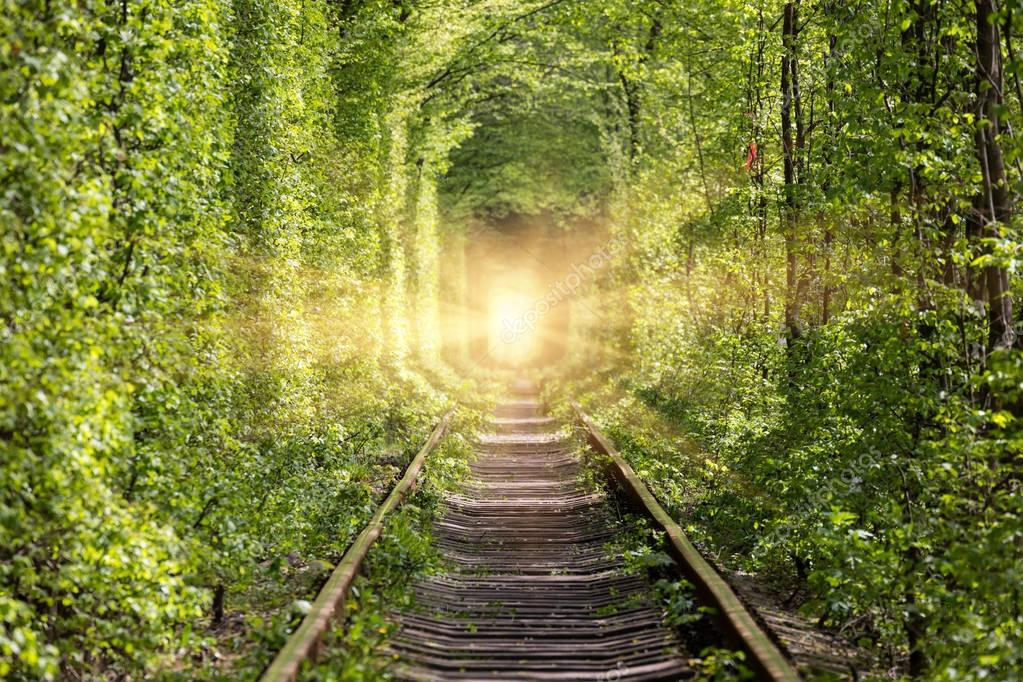 Road to paradise.  Wonders of nature - tunnel of love.