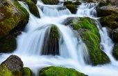alghe, acqua e struttura naturale della cascata