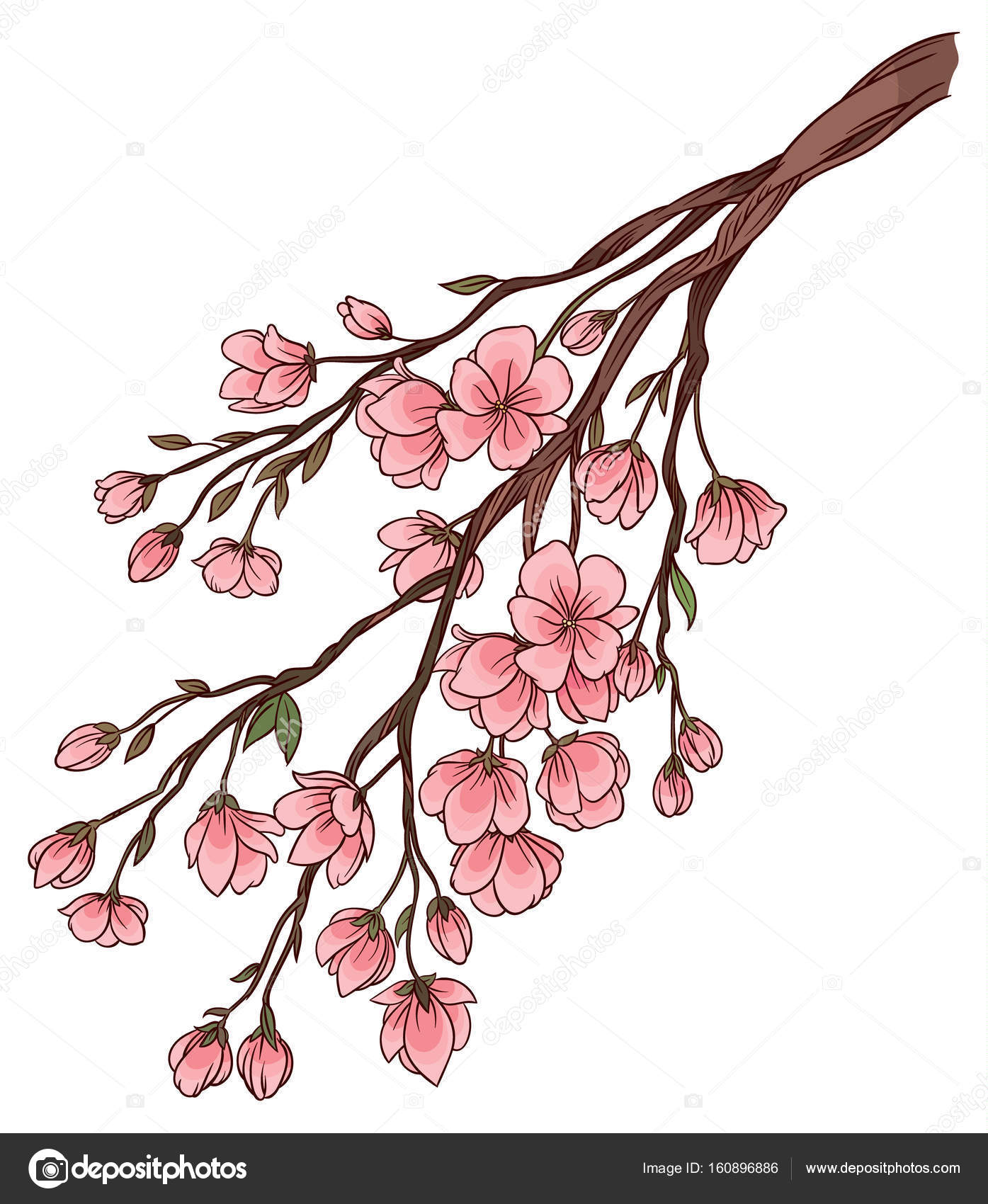 Branch Of Cherry Blossoms With Delicate Pink Flowers Stock