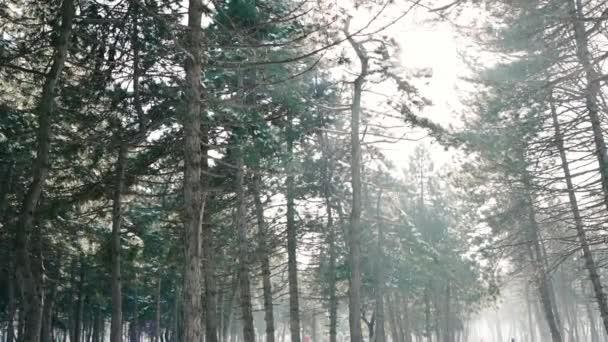 téli táj, hó esik hatalmas fenyők