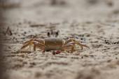 Fotografie Tropische Krabbe auf einem Bach