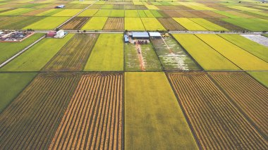 Aerial photo from flying drone of farm buildings in countryside near green fields with sown land with grain.