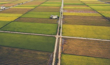 Aerial photo from flying drone of a beautiful landscape of Asian countryside with organic rice plants for healthy and vegetarianism eating.