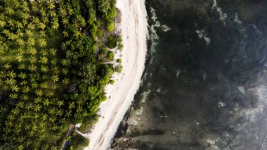 Top view aerial drone photo of stunning sea beach with coral reef bottom and tropical palm trees jungle.