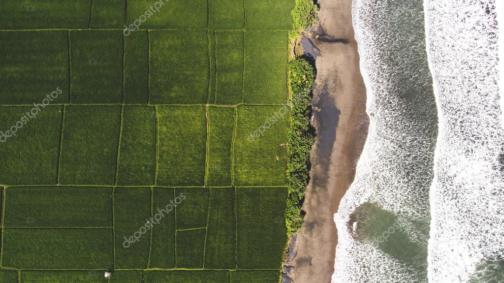 Top view aerial photo from flying drone of beautiful Asian island with green rice fields and amazing blue ocean with calm waves in sunny summer day.