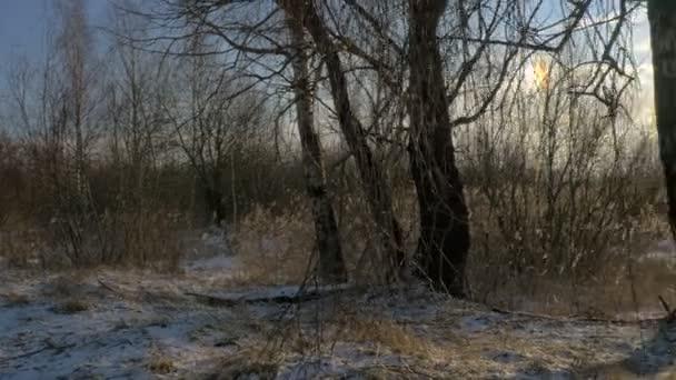 Winterlandschaft - verschneiter Wald mit kleinen Bäumen bedeckt mit Eis und Schnee See. Einem kalten Wintertag.