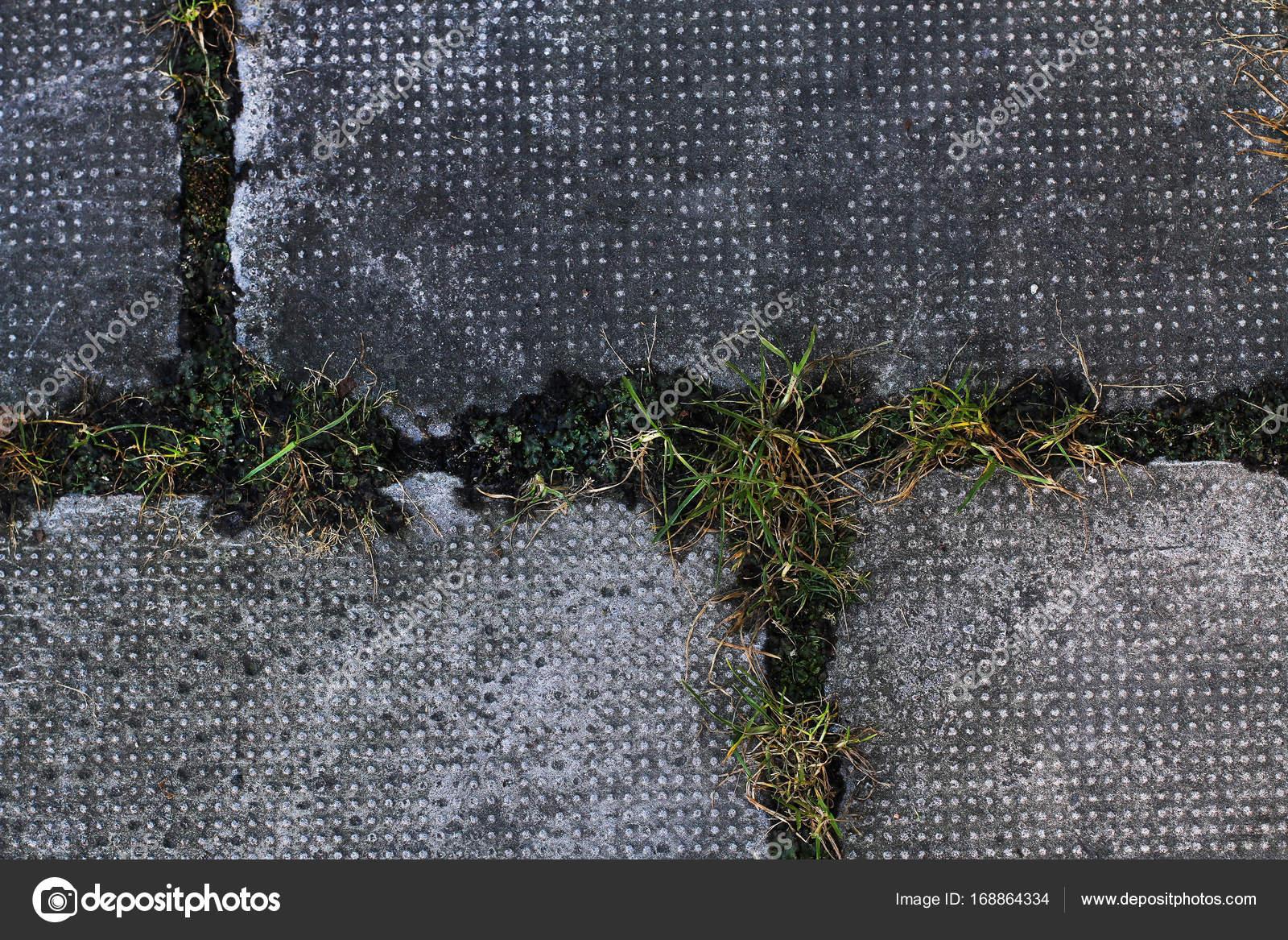 Grandi piastrelle di città sul marciapiede con erba verde una